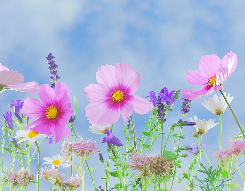 Bloom and wild flowers